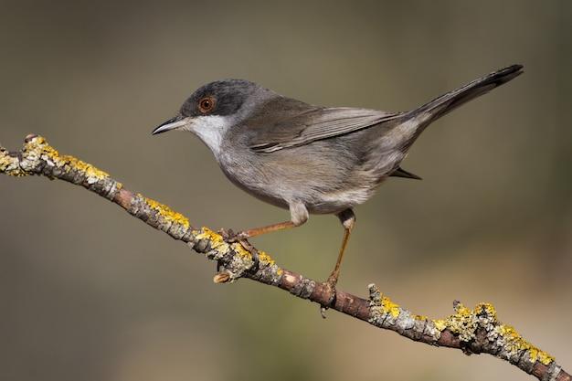 Selectieve aandacht shot van een kleine bruine vogel zittend op een boomtak