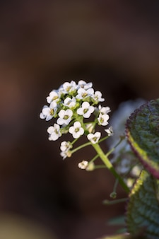 Selectieve aandacht shot van een verse witte bloem in het bos met een onscherpe achtergrond