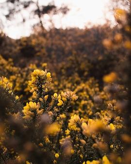Selectieve aandacht shot van mooie gele bloemen omgeven door groene struiken