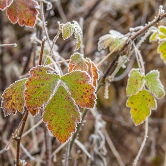 Selectieve aandacht shot van prachtige groene herfstbladeren op houten takken