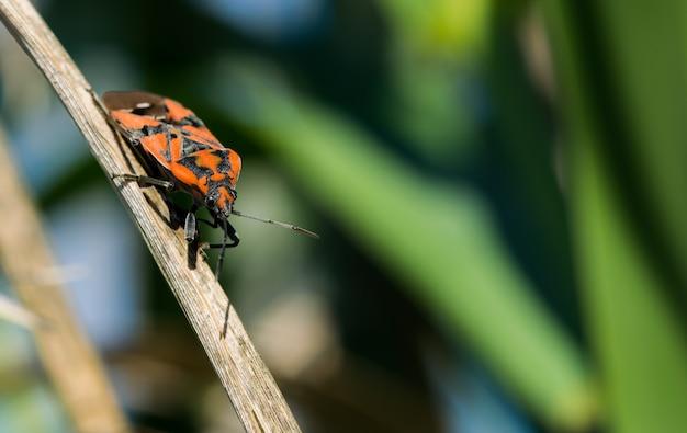 Selectieve aandacht shot van soldaat bug lopen op een plant