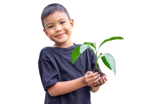 Selectieve aandacht van handen aziatische kind jongen met een kleine groene plant met bodem. op witte achtergrond geïsoleerd.