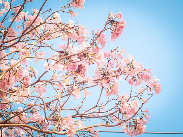 Selectieve aandacht van roze bloemen in bloei. beste lente achtergrond