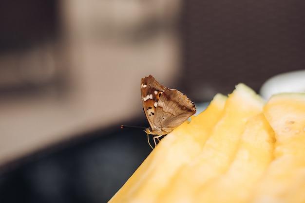 Selectieve aandacht van vlinder op gele zoete meloen