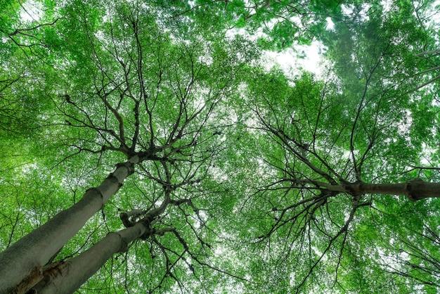 Selectieve aandacht voor boom in park.