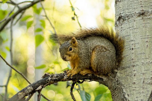 Selectieve close-up die van een bruine eekhoorn op een boomtak is ontsproten