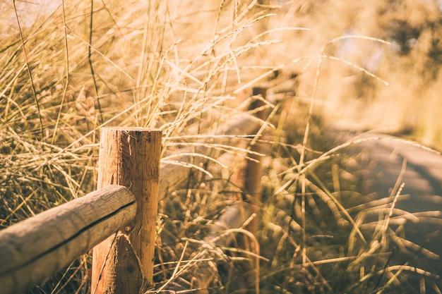 Selectieve close-up die van een houten omheining dichtbij droog gras is ontsproten
