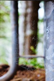 Selectieve close-up die van een spinneweb is ontsproten