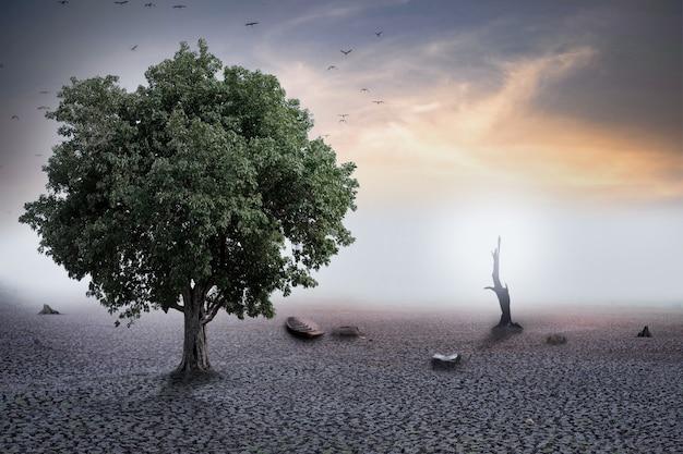 Selectieve focus dor land met zonsondergang, droog landschap in warme toon