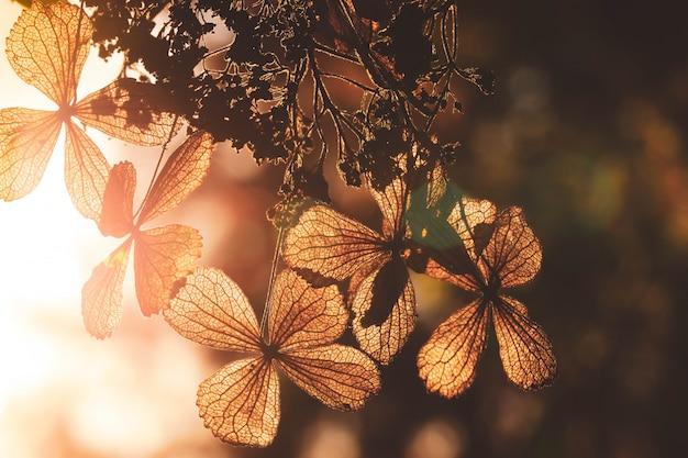 Selectieve focus op bloemblad van droge hortensia bloem met natuur groene achtergrond