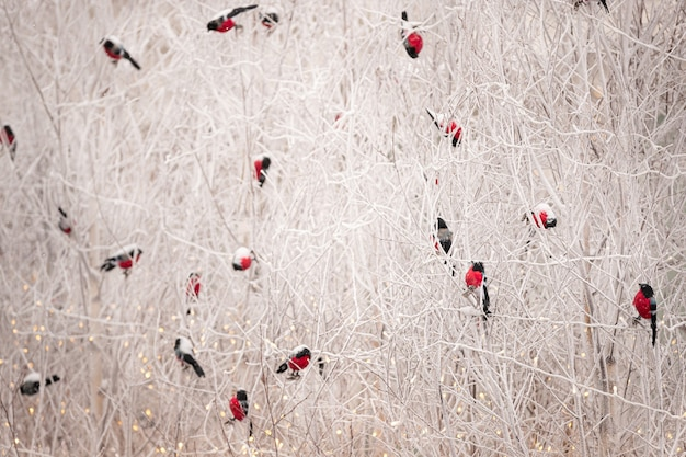 Selectieve focus op kerstpoppen goudvink speelgoed zittend op besneeuwde boomtakken