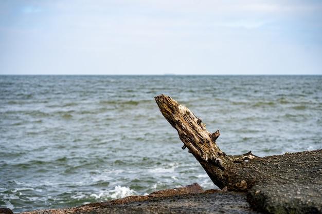 Selectieve focus shot van een boomstam op het strand van presqu'ile provincial park in brighton, canada
