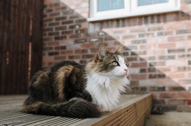 Selectieve focus shot van een bruine en witte kat, zittend op de grond en vooruitkijkend