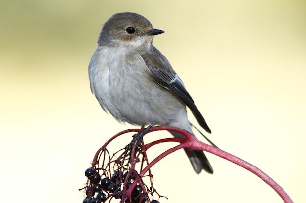 Selectieve focus shot van een exotische kleine mus zittend op de dunne tak van een boom