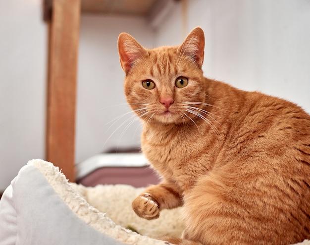 Selectieve focus shot van een gemberkat ontspannen in zijn gezellige bed