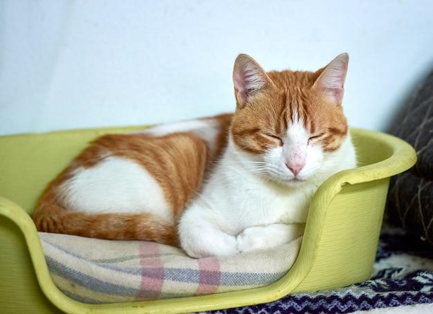 Selectieve focus shot van een huiskat slapen in zijn gezellige bed