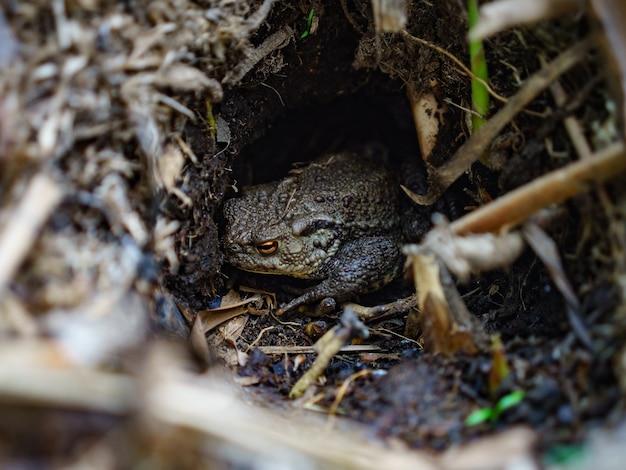 Selectieve focus shot van een kikker in een bos