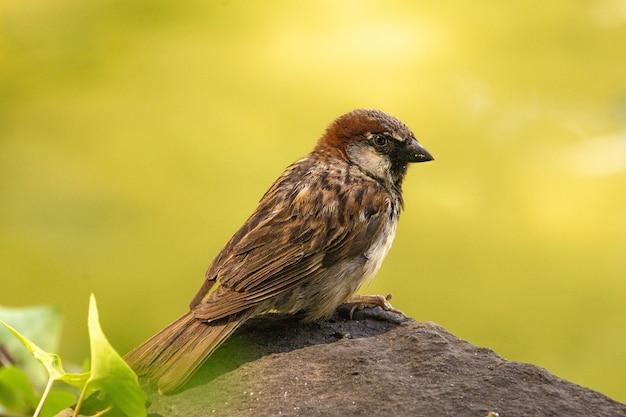 Selectieve focus shot van een kleine bruine vogel zittend op de steen