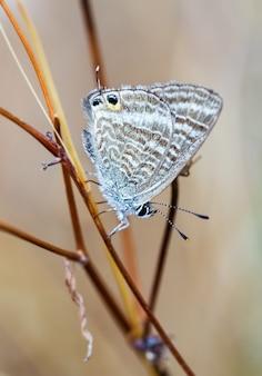 Selectieve focus shot van een prachtige vlinder in hun natuurlijke omgeving