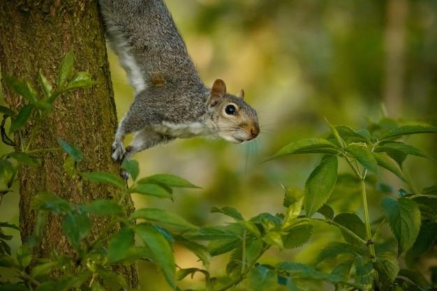 Selectieve focus shot van een schattige eekhoorn op een boomstam in het midden van een bos