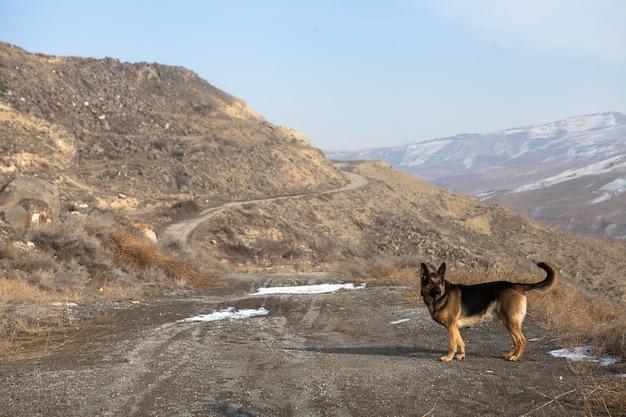 Selectieve focus shot van een schattige herdershond in de natuur