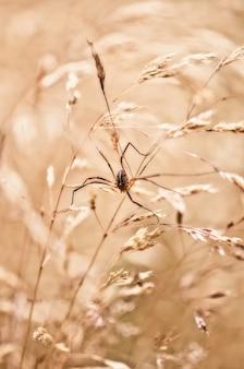 Selectieve focus shot van een spin op een tarwe