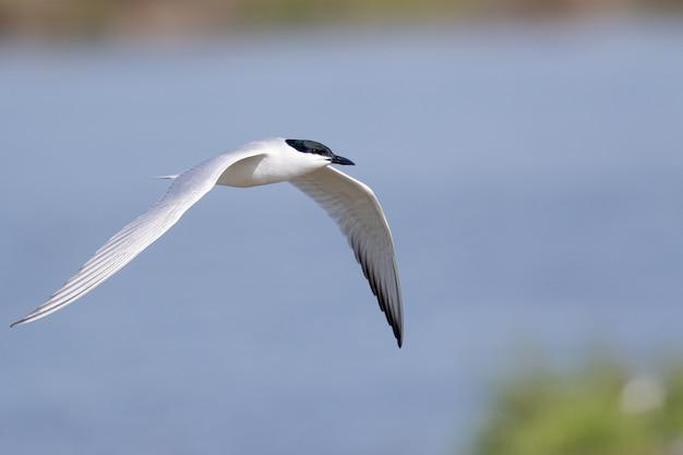Selectieve focus shot van een visdief op vlucht