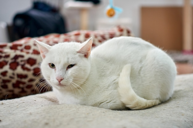 Selectieve focus shot van een witte kat ontspannen op zijn gezellige bed