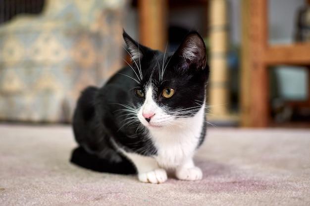 Selectieve focus shot van een zwart-witte kat liggend op de vloer en kijkt naar links