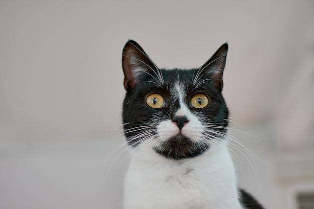 Selectieve focus shot van een zwart-witte kat met grote gele ogen