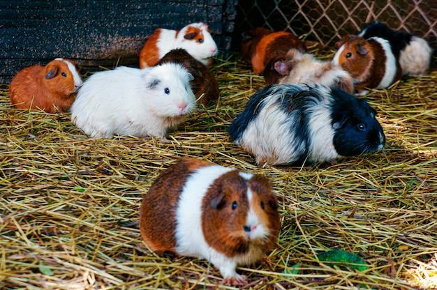 Selectieve focus shot van hamsters lopen op de grond