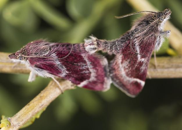 Selectieve focus shot van hawk moths op een tak