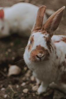 Selectieve focus shot van het schattige bruine en witte tamme konijn