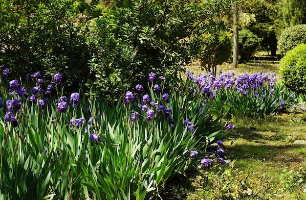 Selectieve focus shot van irissen in de tuin overdag