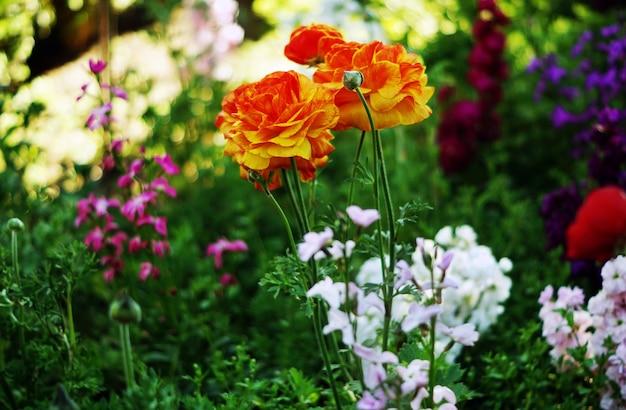 Selectieve focus shot van oranje en gele rozen in de zachte schaduwen