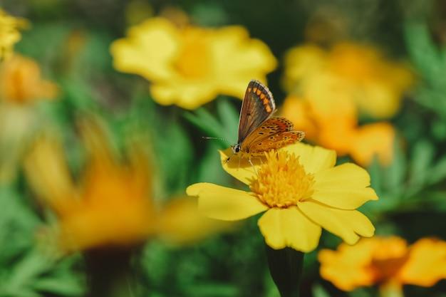 Selectieve focus van de vlinder op de gele bloem