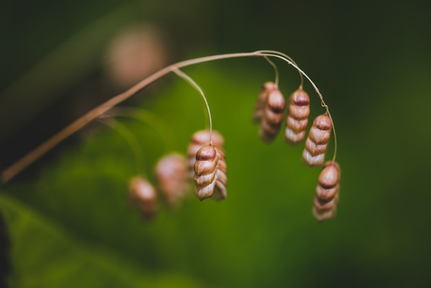 Selectieve focus van droog, groter trillend gras onder het zonlicht met een wazige