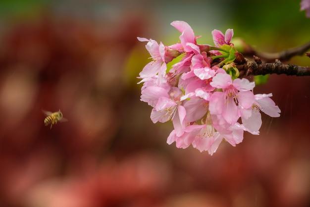 Selectieve focus van een bij die vliegt in de buurt van een mooie roze bloesem in een tuin in hong kong