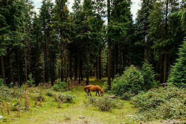 Selectieve focus van een geweldig bruin paard in het bos in baskenland, spanje