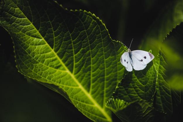 Selectieve focus van een pieris mannii op groene bladeren in een veld onder het zonlicht