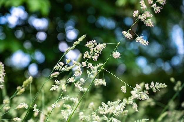 Selectieve focus van het gras in een veld onder het zonlicht met een onscherpe achtergrond en bokeh lichten