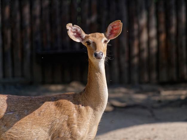 Selectieve focusopname van een hert in de dierentuin overdag