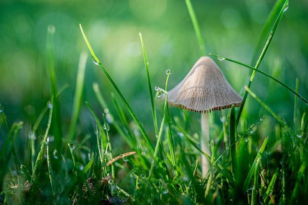 Selectieve focusopname van een paddenstoel die groeit in het gras, gevangen in opole, polen
