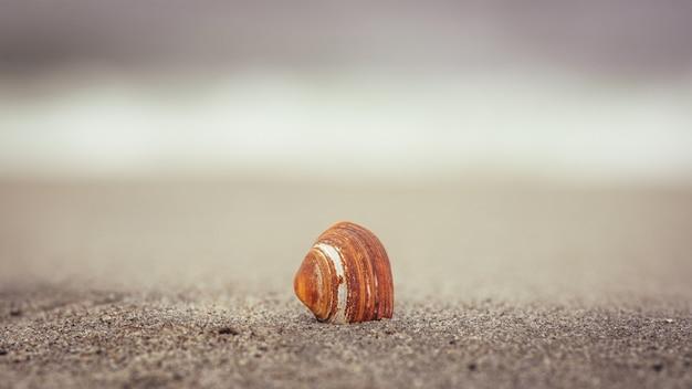Selectieve focusopname van een schelp op het strand