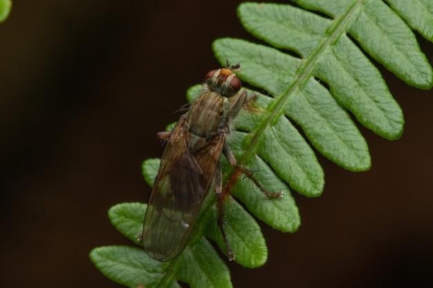 Selectieve focusopname van een vlieg op een blad