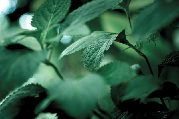 Selectieve focusopname van groene bladeren