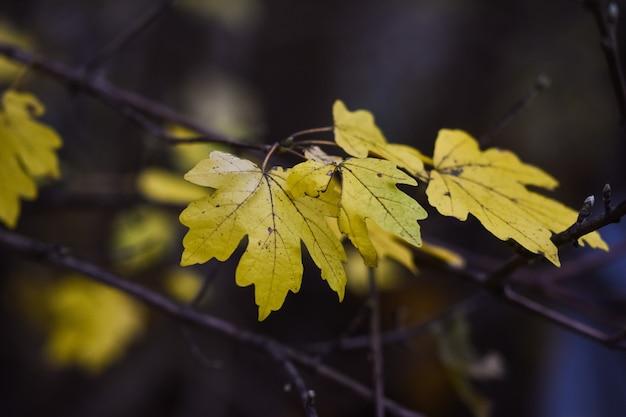 Selectieve focusopname van herfstbladeren