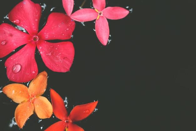 Selectieve nadruk op kleurrijke bloemen in water bij tropische tuin met exemplaarruimte