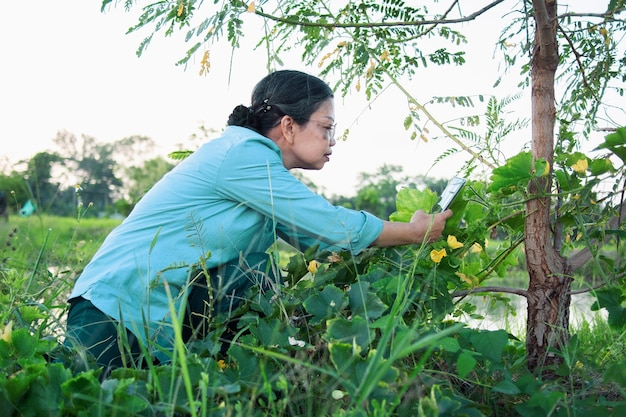 Senior aziatische vrouw dragen van een bril met behulp van slimme telefoon fotograferen van planten en bomen op het platteland biologische boerderij groene natuur achtergrond.