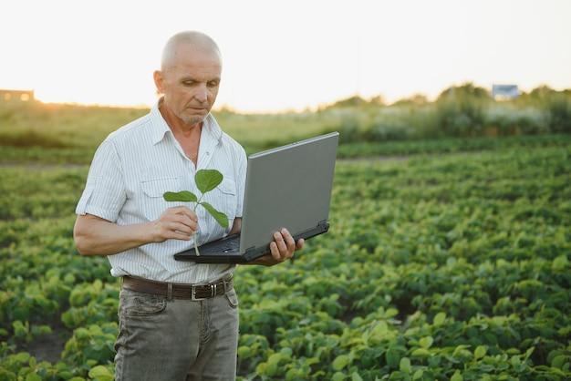 Senior boer staande in sojaboon veld gewas te onderzoeken